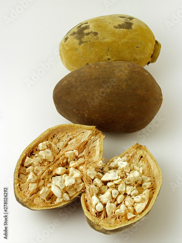 Baobab tree fruits. Adansonia digitata. Canvas Print