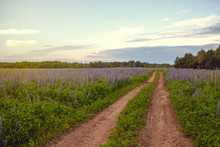 Country Road In The Field