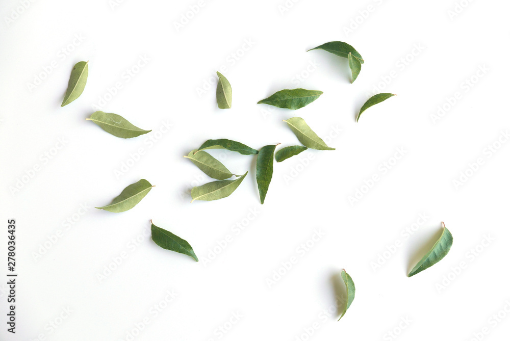 Fototapety, obrazy: Curry leaves isolated on white background.