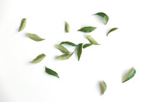 Curry Leaves Isolated On White Background.