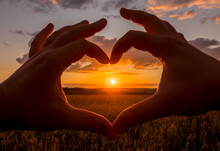 Hands In The Shape Of Heart Against The Sunset Over The Wheat Field.