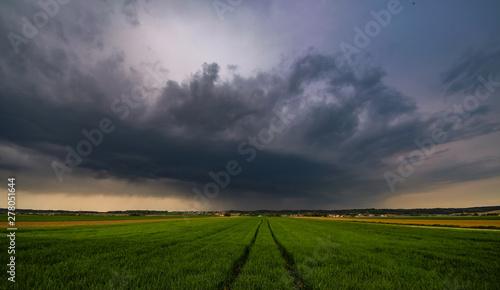 Foto auf AluDibond Lavendel Sturm