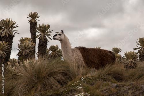 Recess Fitting Lama Landscapes