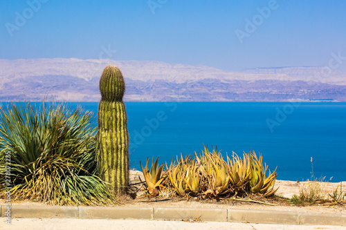 cactus and desert plants dry nature landscape in hot colorful summer weather sea Tablou Canvas