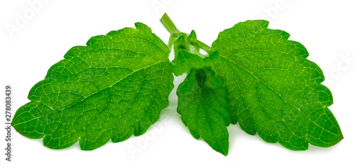 fresh green leaf of melissa isolated on white background #278083439