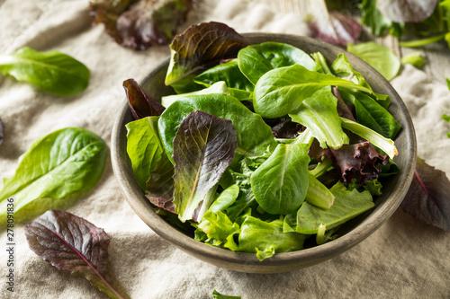 Fototapeta Raw Green Organic Baby Spring Lettuce