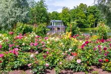 Marble Bridge And Flowers In Catherine Park, Tsarskoe Selo, Saint Petersburg, Russia