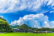 日本の夏 8月撮影 入道雲 積乱雲 田んぼ