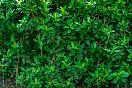 Foto auf Leinwand Baume Green nature leaf texture background