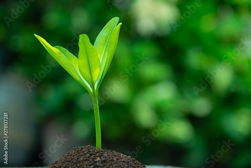 Young green leaves are sprouting, growth up, Business growth concept Fototapet