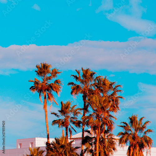 Palm view. Canary Island. Travel concept Wall mural