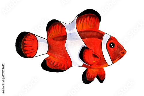 Fotografie, Tablou  Finding Nemo, clown fish, reef fish, anemone fish isolated, white background, wa