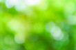 Leinwanddruck Bild - Sunny abstract green nature background