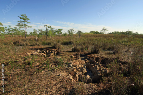 Everglades limestone bedrock exposed during extreme drought conditions in Everglades National Park, Florida Wallpaper Mural
