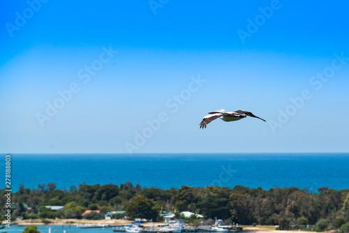 Cadres-photo bureau Turquie pelican in flight