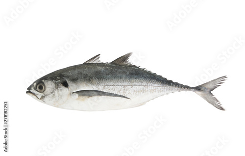 Fotografija  Torpedo scad fish isolated on white