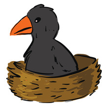 Baby Crow In Nest, Illustration, Vector On White Background.