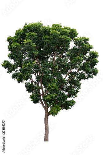 Fotografia, Obraz  Trees isolated on white background,clipping path