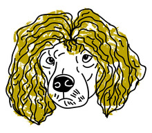 Poodle With Hair, Illustration, Vector On White Background.