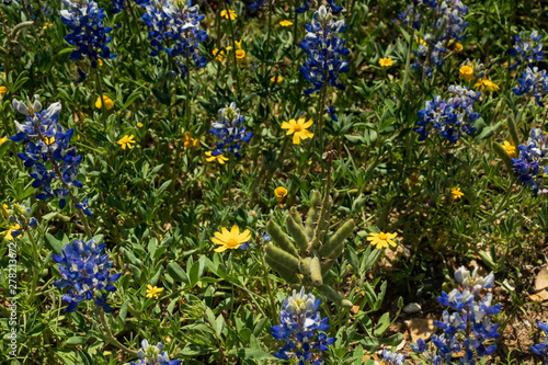 Yellow wildflowers and Bluebonnets in a field with large trees and blue sky background
