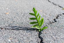 Plant Growing Out Of A Crack. Concept