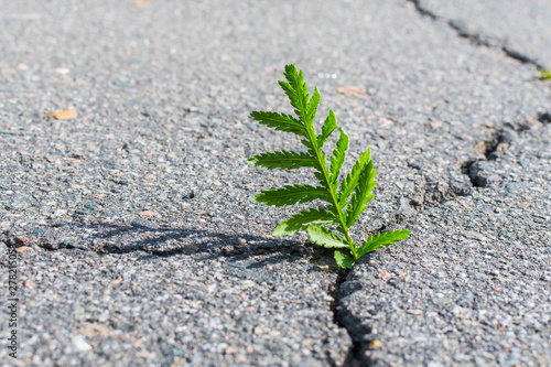 plant growing out of a crack. concept Wallpaper Mural