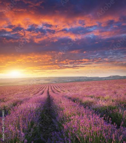 Foto auf AluDibond Aubergine lila Meadow of lavender at sunset