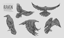 Sketch Of Flying Raven. Hand Drawn Illustration Converted To Vector