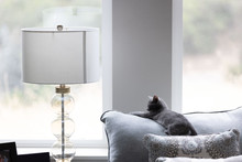 Adorable, Animal, Apartment, Beautiful, Bedroom, Blue, Cat, Charming, Comfortable, Contemporary, Cute, Daylight, Decor, Decoration, Design, Domestic, Ears, Feline, Fur, Furniture, Furry Animal, Gray,