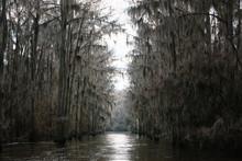 Lake Path Cut Through Cypress Forest