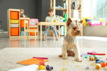 Cute Dog Sitting Near Paints A...