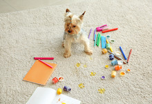 Cute Dog Sitting Near Paints And Pencils On Messed Carpet
