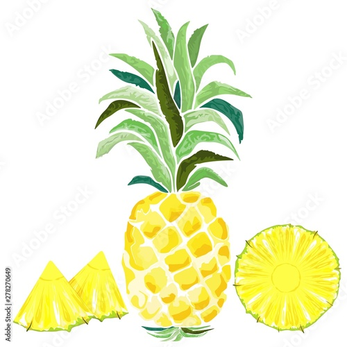 La pose en embrasure Draw Pineapple and Slices Watercolor Style Vector illustration isolated on white