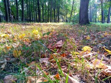 Autumn Forest With Fallen Yell...
