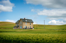 Abandoned Farmhouse In A Wheat Field. A Classic Farmhouse Located In The Palouse Area Of Eastern Washington State Sits In The Middle Of A Maturing Wheat Field Abandoned Long Ago As The Main Residence.