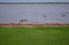 Springtime On Lake Bemidji: Ca...