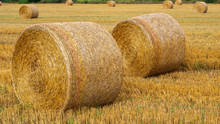 Freshly Rolled Hay Bales In A Field In Tuscany Italy. Golden And Relaxing Contest. Summer Season