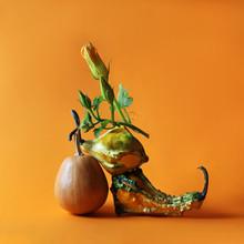 Composition Of Decorative Pumpkins