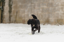 Happy Black Puppy Plays In Her...