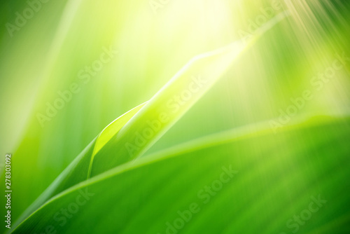 Obrazy zielone  nature-of-green-leaf-in-garden-using-as-background-natural-wallpaper