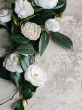 White Camellias On Textured Ba...