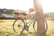 Vintage Bicycle On The Field W...