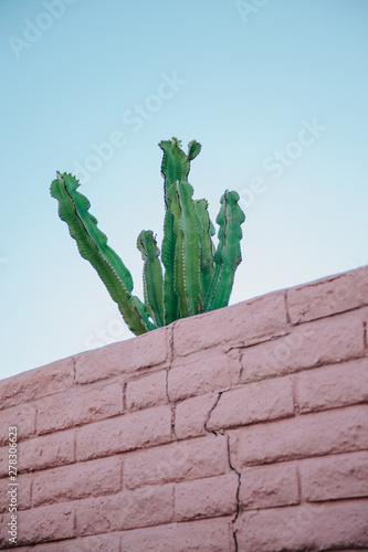 Foto op Plexiglas Historisch mon. Cactus overlooking over a pink wall