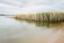 Reeds In The Lower Murray RIver In South Australia