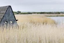 A Bird Hide In Reeds By Wetlands