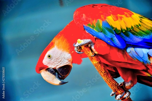 Photo  A macaw close up shot