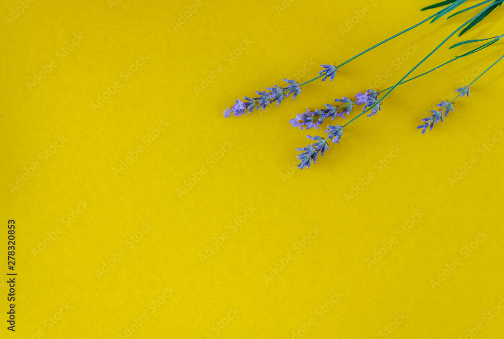 Fototapety, obrazy: bouquet of fresh lavender flowers on a bright yellow background, top view. Copy space. Flat lay
