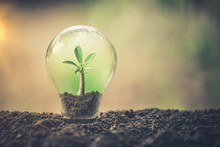 Symbol Of Environmental Disaster Or Protection And Helping Tree Growing A Light Bulb Inside. Environment Management For Sustainable. Earth Day Concept
