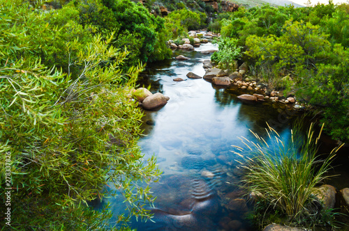 Poster Forest river Calm Oasis, Small Babbling Brook In The Cederberg Wilderness, South Africa. A Stream or Clear Water and Green Foliage