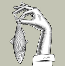 Woman's Hand Holding A Herring Fish In Her Fingers